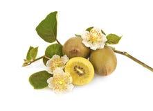 Golden kiwi fruit. Golden New Zealand kiwi fruit with flowers and leaves isolated on white royalty free stock photos