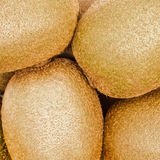 Golden Kiwis Stock Photography