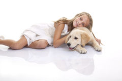 Golden labrador dog Royalty Free Stock Photo