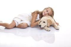 Golden labrador dog Royalty Free Stock Photo