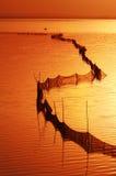 Golden lake. This is poyanghu lake at sunset Royalty Free Stock Photos