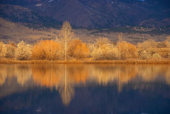 Golden Lake Edge in Autumn. Small lake near Boulder, Colorado in the golden light of sunrise Stock Photo