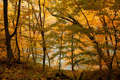 Golden landscape of beautiful autumn forest. On the edge of a river Stock Photo