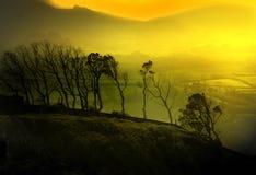 Golden landscape Stock Photography