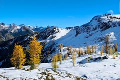 Hiking in Pacific Northwest in Seattle area. Golden Larch trees under snow on mountain range. Seattle. Maple pass. Cascade Mountains. Washington. United States royalty free stock photography