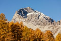 Golden Larches in the alps of canton grisons, Switzerland. Golden Larches and Peak in the alps of canton grisons, Switzerland Stock Photos