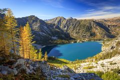 Golden larches in the Cascade Mountains, Washington, USA stock images