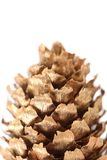 Golden large pine cone. Stock Images