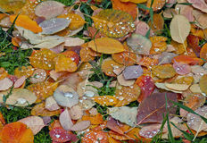 Golden Layers of Fall in the Grass with Rain Stock Photography