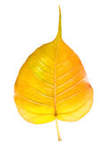Golden leaf Royalty Free Stock Photography