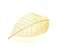 Golden leaf Royalty Free Stock Photos