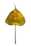 Golden leaf. That hot in Thailand stock image