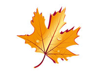 Golden leaf Stock Photography