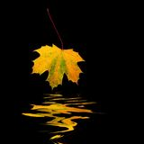 Golden Leaf Royalty Free Stock Photos