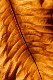 Golden leaf background Royalty Free Stock Image