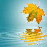 Golden Leaf Beauty Royalty Free Stock Image