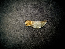 Golden leaf. Black texture and golden leaf on table Stock Image