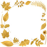 Golden Leaf Border Royalty Free Stock Photo