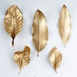 Golden leaf design elements. Decoration elements for invitation, wedding cards, valentines day, greeting cards. Isolated. Royalty Free Stock Photos
