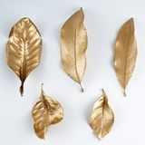 Golden leaf design elements. Decoration elements for invitation, wedding cards, valentines day, greeting cards. Isolated. Stock Photography