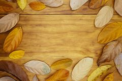 Golden leaf frame on wooden table. Autumn leaf decor flat lay photo. Orange leaf frame on table top view. royalty free stock photography