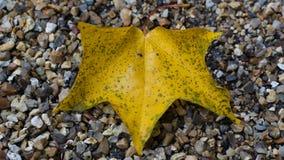 Golden Leaf on Gravel Royalty Free Stock Image
