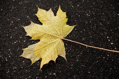 Golden leaf on the ground Royalty Free Stock Photos