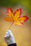 Golden leaf and hand. Hand and golden leaf on background Stock Photos