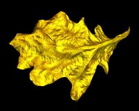 Golden leaf. Stock Photo