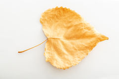 Golden leaf Stock Images