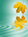 Golden Leaf Movement. Abstract of a maple leaf in the colors of autumn with reflection over rippled water. Over pastel green background with white central glow Royalty Free Stock Image