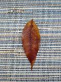 Golden leaf. One bronze leaf on a bamboo backround royalty free stock image