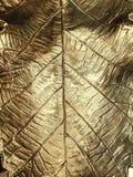Golden leaf plate stock images