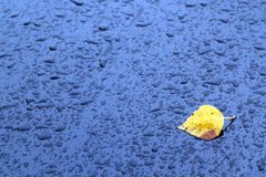 Golden leaf on wet car surface. Royalty Free Stock Photography