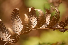 Golden leafs of fern Royalty Free Stock Photos