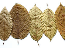 Golden leaves. Five dried leaves in a row on a white background Royalty Free Stock Photo