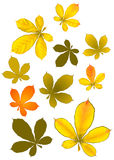Golden leaves. Chestnut leaves in autumn colours Royalty Free Stock Photos
