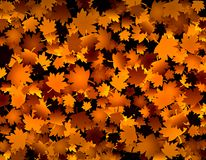 Golden leaves. Autumn fall background with golden leaves stock image