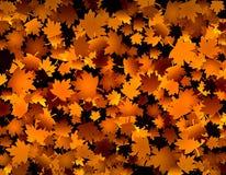 Golden leaves Stock Image