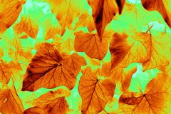 Golden leaf pattern Stock Image