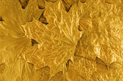 Golden leaves background Stock Photography