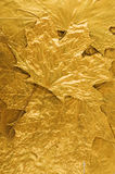 Golden leaves background Stock Images