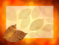 Golden leaves background Stock Image