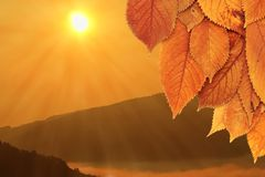 Golden leaves and beautiful sunrise Stock Photos