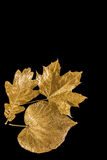 Golden leaves Royalty Free Stock Images