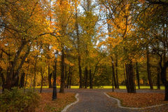Golden leaves on branch, autumn wood with sun rays Stock Photo