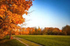 Golden leaves on branch, autumn wood with sun rays Royalty Free Stock Photos
