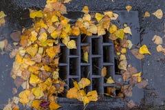 Golden leaves clogging a street drain. Golden leaves clogging a drain Royalty Free Stock Image