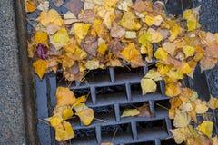 Golden leaves clogging a street drain. Golden leaves clogging a drain Royalty Free Stock Photos