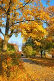 Golden leaves on forest park tree with footpath Royalty Free Stock Photos